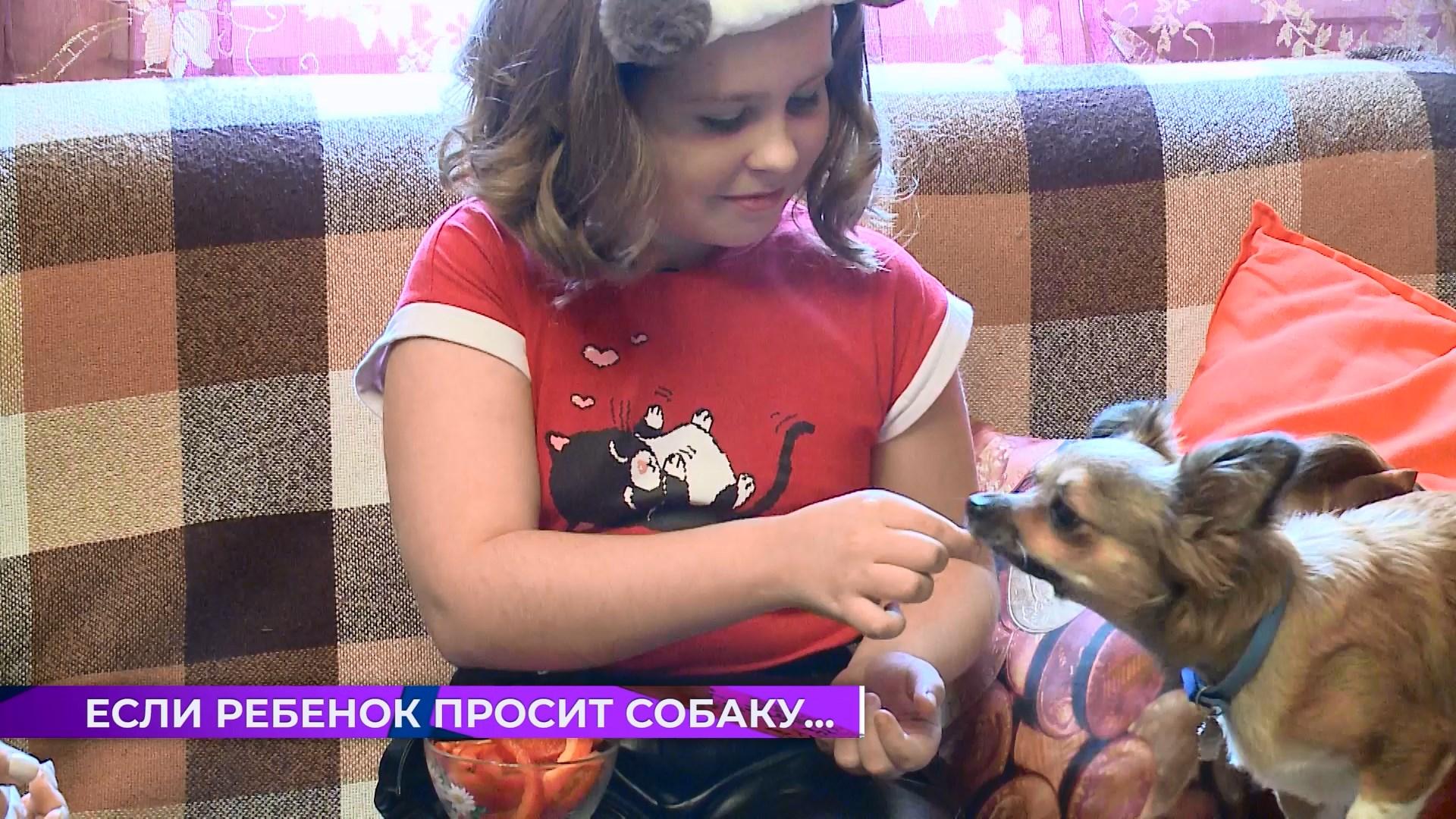 Собаки и люди: если ребенок просит собаку…