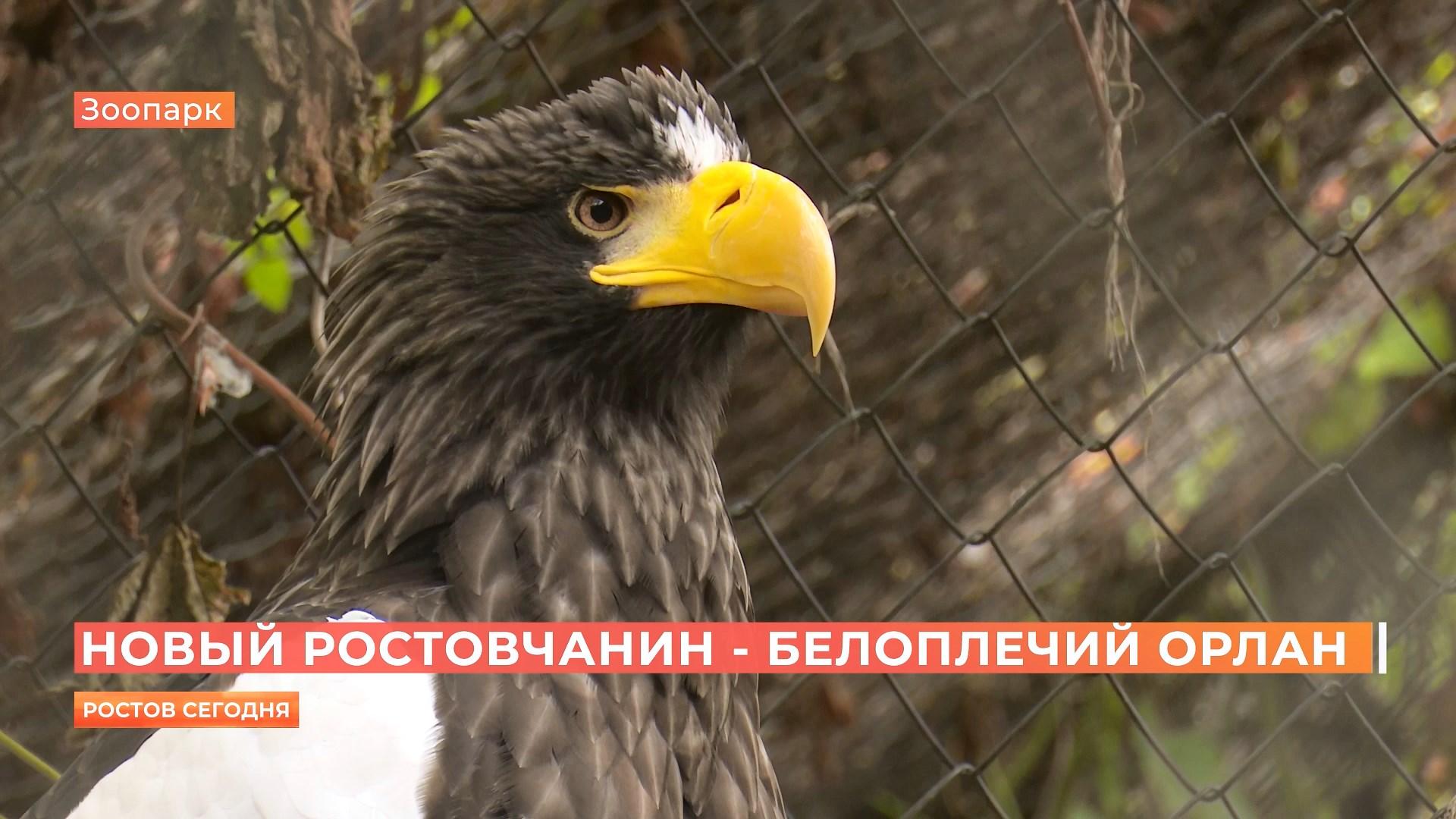 Белоплечий орлан поселился в Ростовском зоопарке