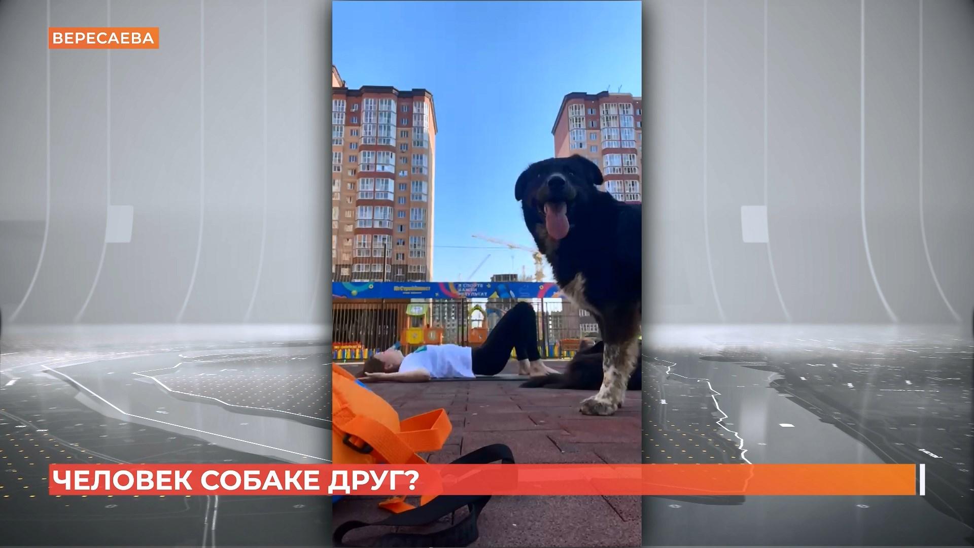 Неизвестные отравили бездомную собаку в Вересаево